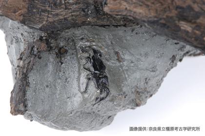 木片とともに土砂に埋まった状態で発見された